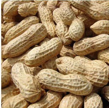 Washed wholesale peanuts in shell shandong