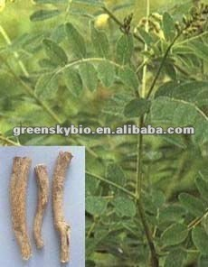 Astragalus Root Extract Powder