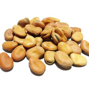 New crop dry fava beans broad beans with Competitive price