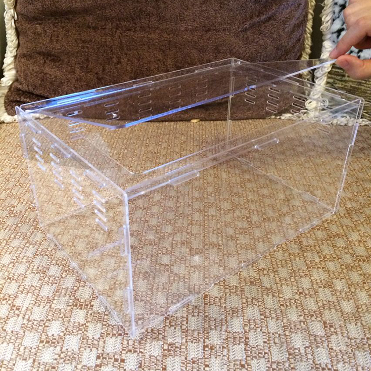 elegant acrylic reptile display box cases