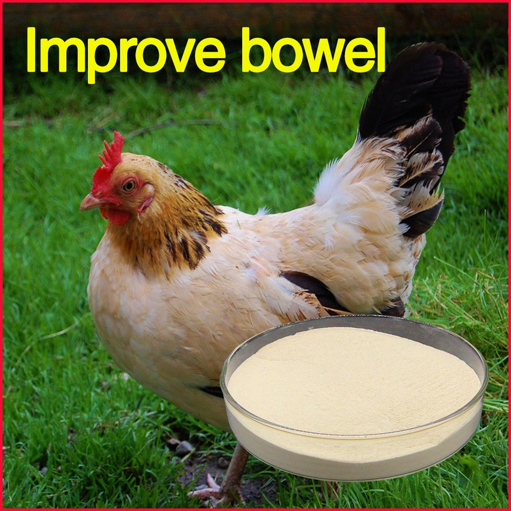 poultry feed for your poultry and livestock