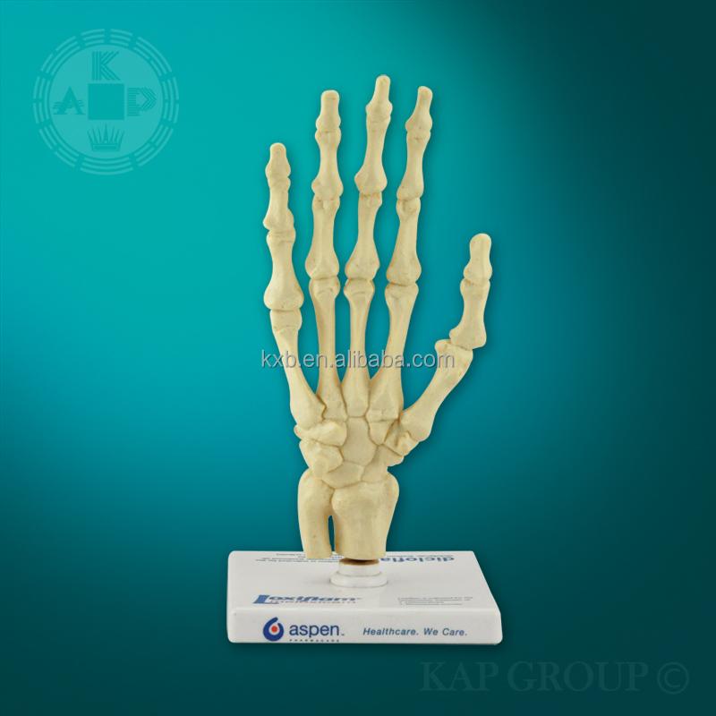 Advanced Pvc Human Skeleton Hand Model Artificial Anatomical Free