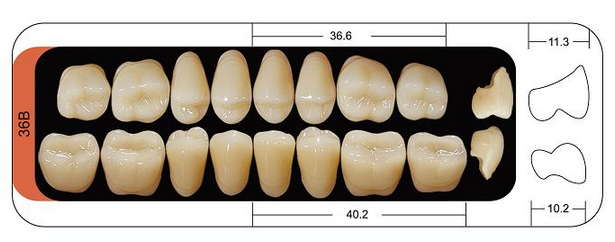 rs-l3-p12] 3 Layers Upper Posterior False Teeth (8*12) With Shade ...