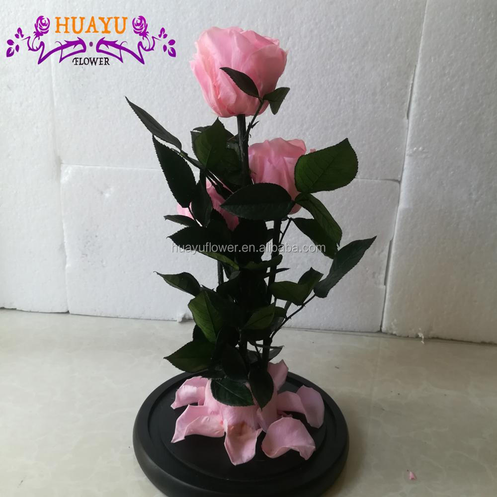 China Suppliers Wholesale Factory Price Preserved Ecuador Rose