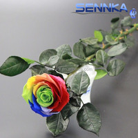 Colorful long stem roses preserved flower at reasonable prices