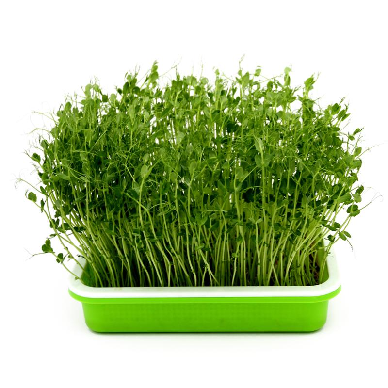 Bandejas de forraje para cultivo de plantas en vivero para hidroponia