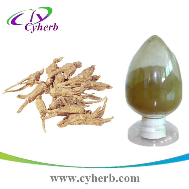 dong quai extract ligustilide 1% /Chinese angelica extract
