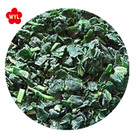 Frozen Iqf Spinach HACCP KOSHER HALAL SEDEX FDA BSCI New Crop Bulk IQF Chopped Frozen Spinach