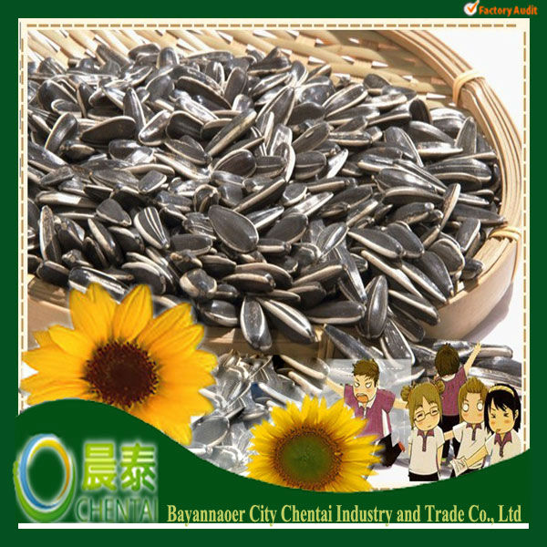 Hot Sell New Crop Sun flower Seed