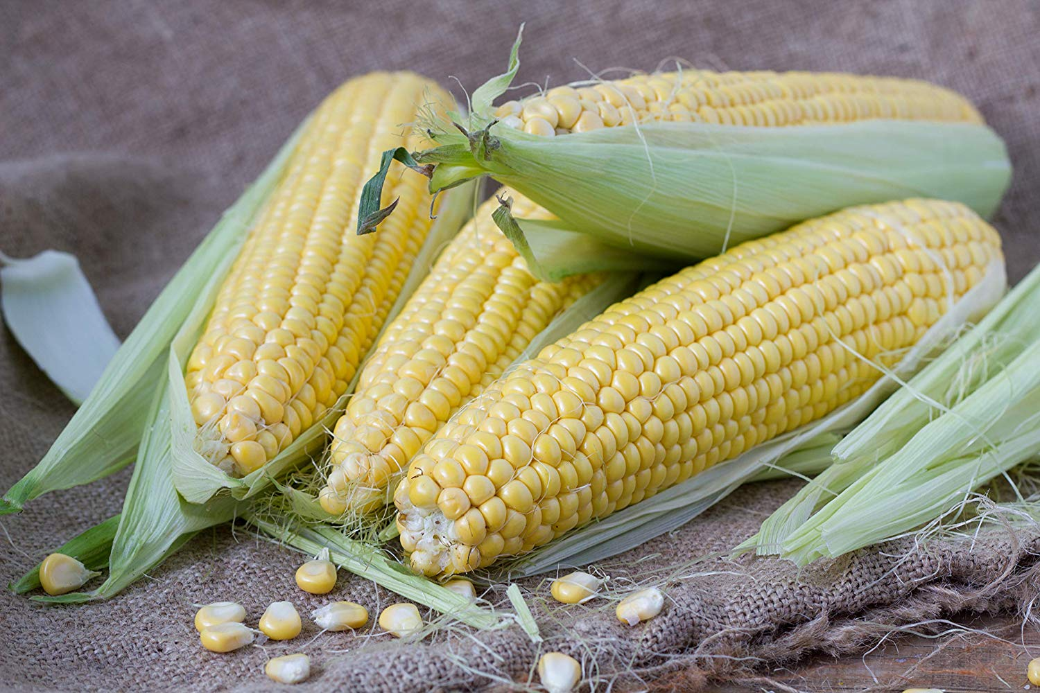 15 Seeds//Pack Fruit Corn Seed Red Zea Mays Maize Organic Original Pack B011