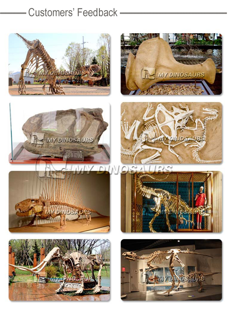 My-dino real size museum quality dinosaur skeleton