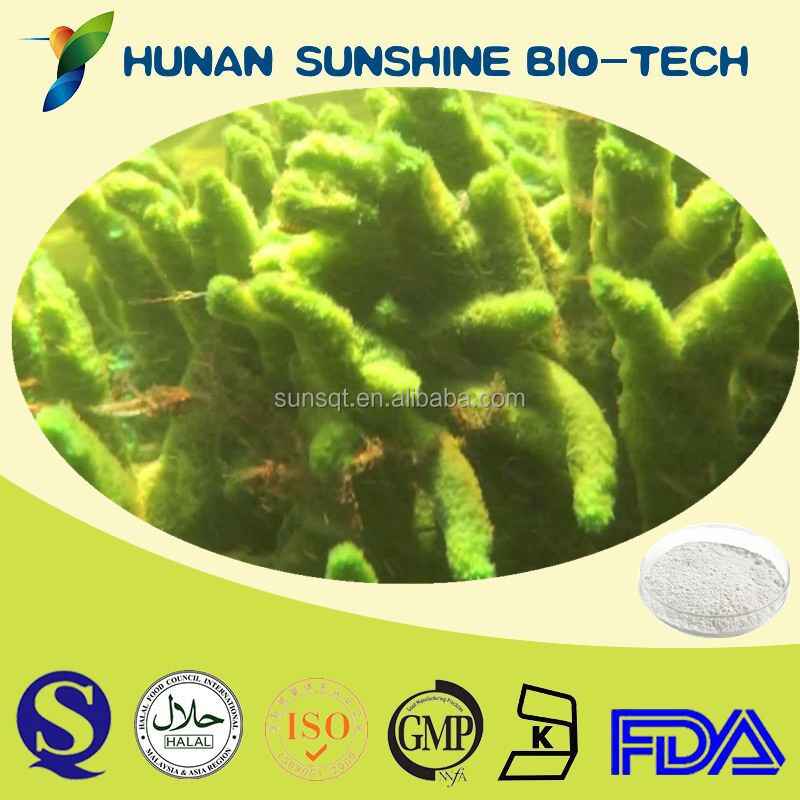 Cosmetic Ingredient Freshwater Sponge P.E. for Skin Care
