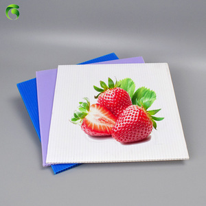 2018 Green 100% PP Material corrugated Sheets For Advertisement Placard