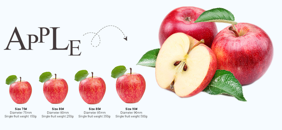 Top Quality Fruit Chinese Red Fresh Fuji Apple Export Price To Bangladesh