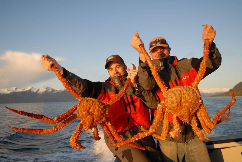CR holandesa: Máxima & demás naranjitos - Página 69 GSB-Great-King-Crab