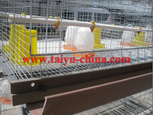 Day old layer chicks cages