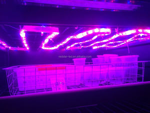 Wholesale Indoor Plant Equipment Daisy Chain Custom Spectrum 20w Led Grow Light Strip
