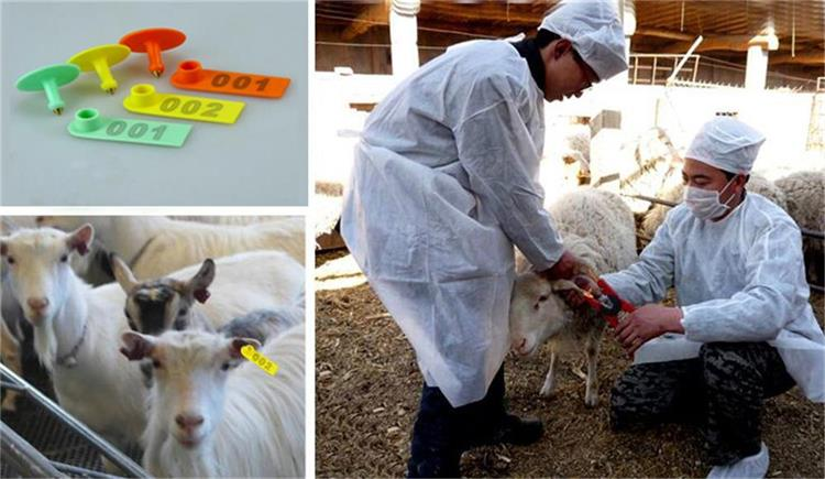 100 Sets Sheep Goat Ear Tag Orange Yellow Green Plastic Sheep Ear Tag Animal Livestock