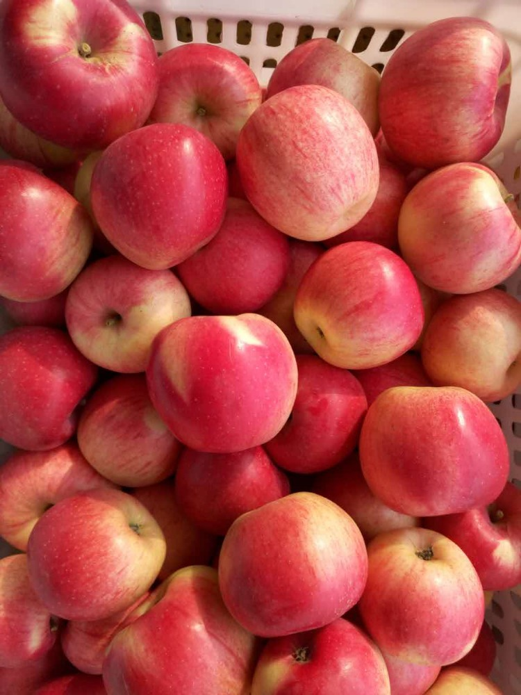 fresh <strong>apples</strong>