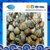 fresh frozen yellow short necked baby clams factory produce