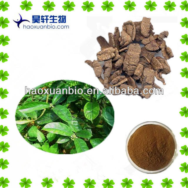 Bacopin Extract/Morinda officinalis How extract 10:1