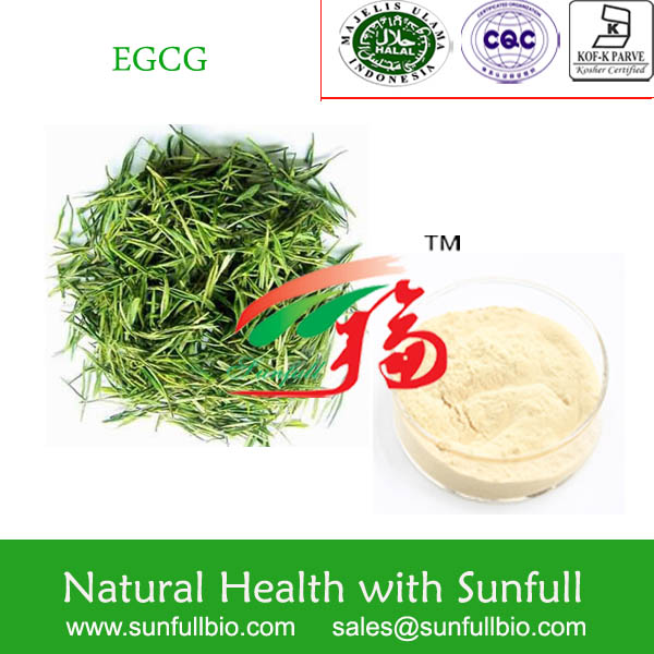 Green Tea Extract 60% EGCG for enhancing metabolism and fat oxidation