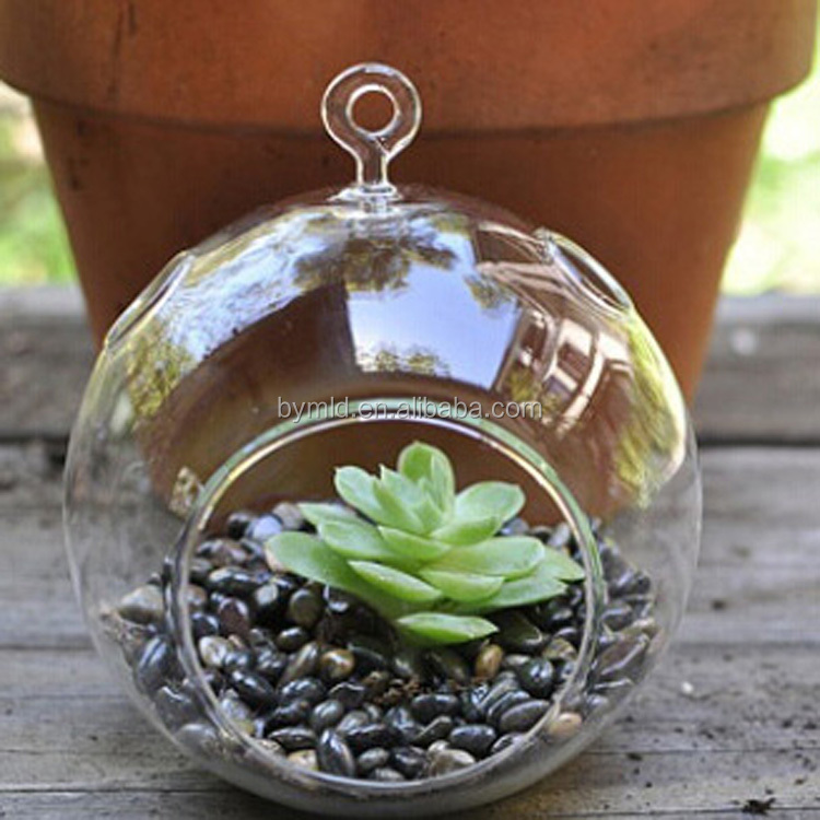 Hanging Glass Globe Terrarium Perfect For Air Plants Buy High