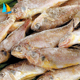 Factory price big and freezing frozen yellow croaker