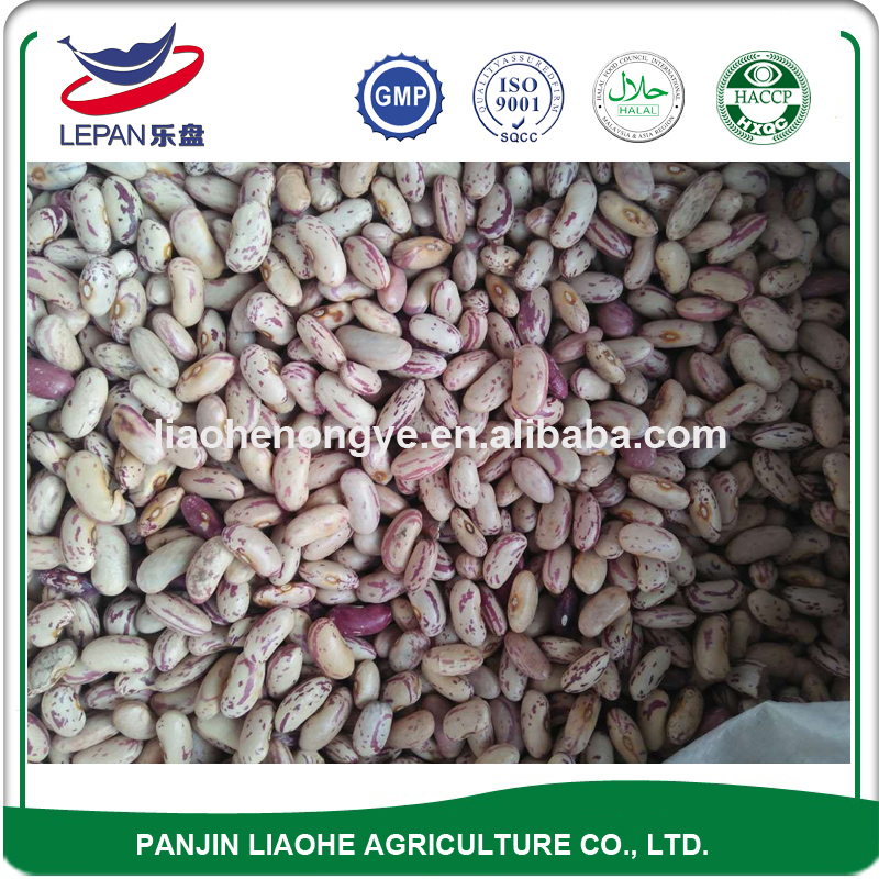 LSKB Light Speckled Kidney Pinto Sugar Beans