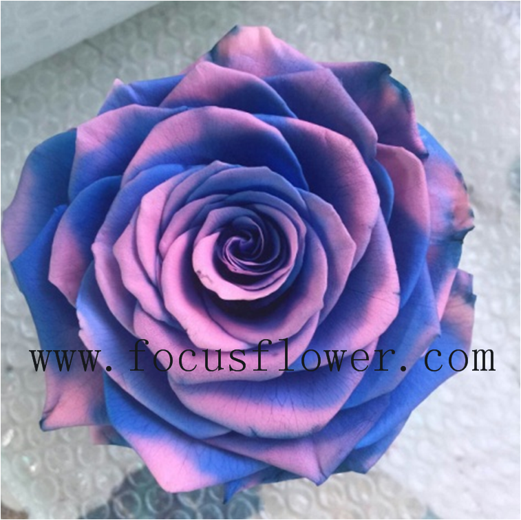 Wholesale Valentine Gift Preserved Flowers In Glass From China ...