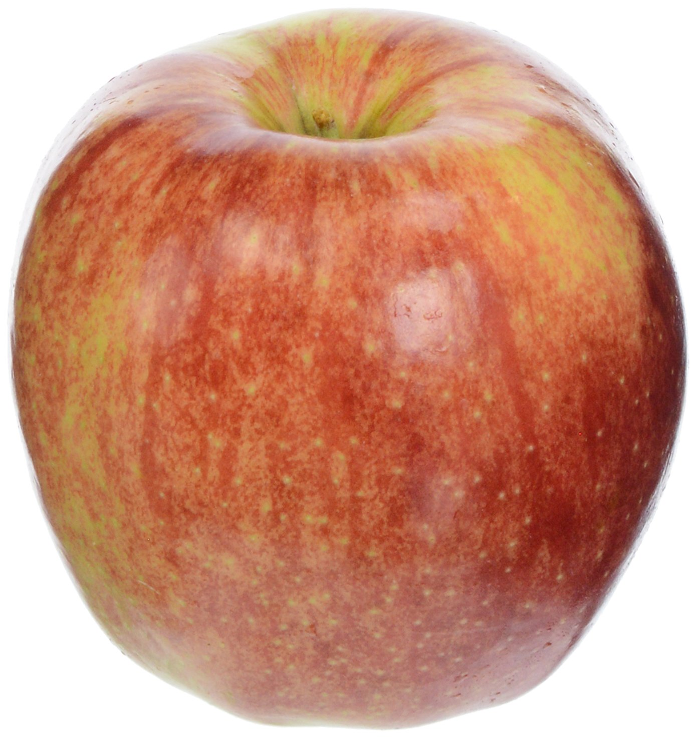 Jonagold Apple, One Large