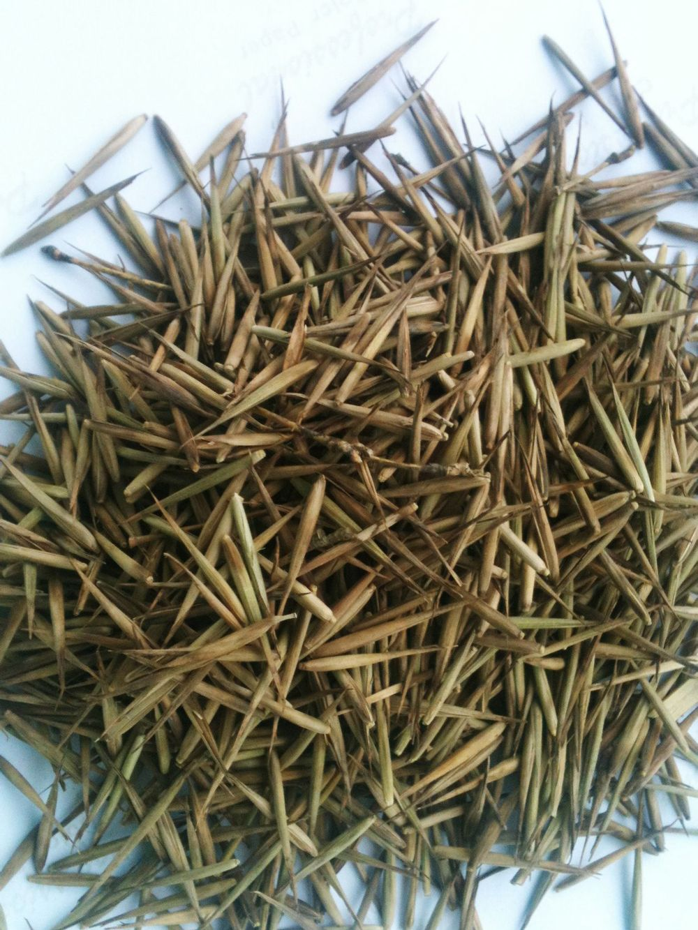 High Sprouting Rate Bamboo Seeds For Growing Bamboo Trees ...