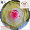 Online Shop Preserved Fresh Rose Flowers Gift For Local Florists Sold All Seasons