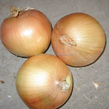 2016 New Crops fresh onion for export from China