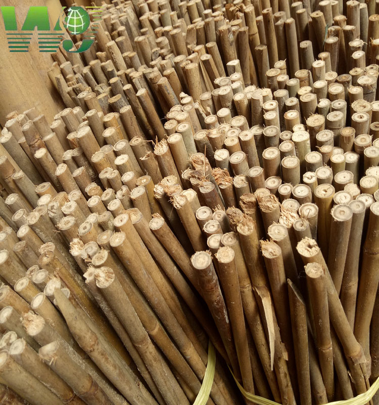 WY T-001 tonkin bamboo Type and can Part garden bamboo