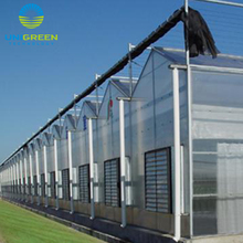 Agricultural Venlo Polycarbonate Greenhouse