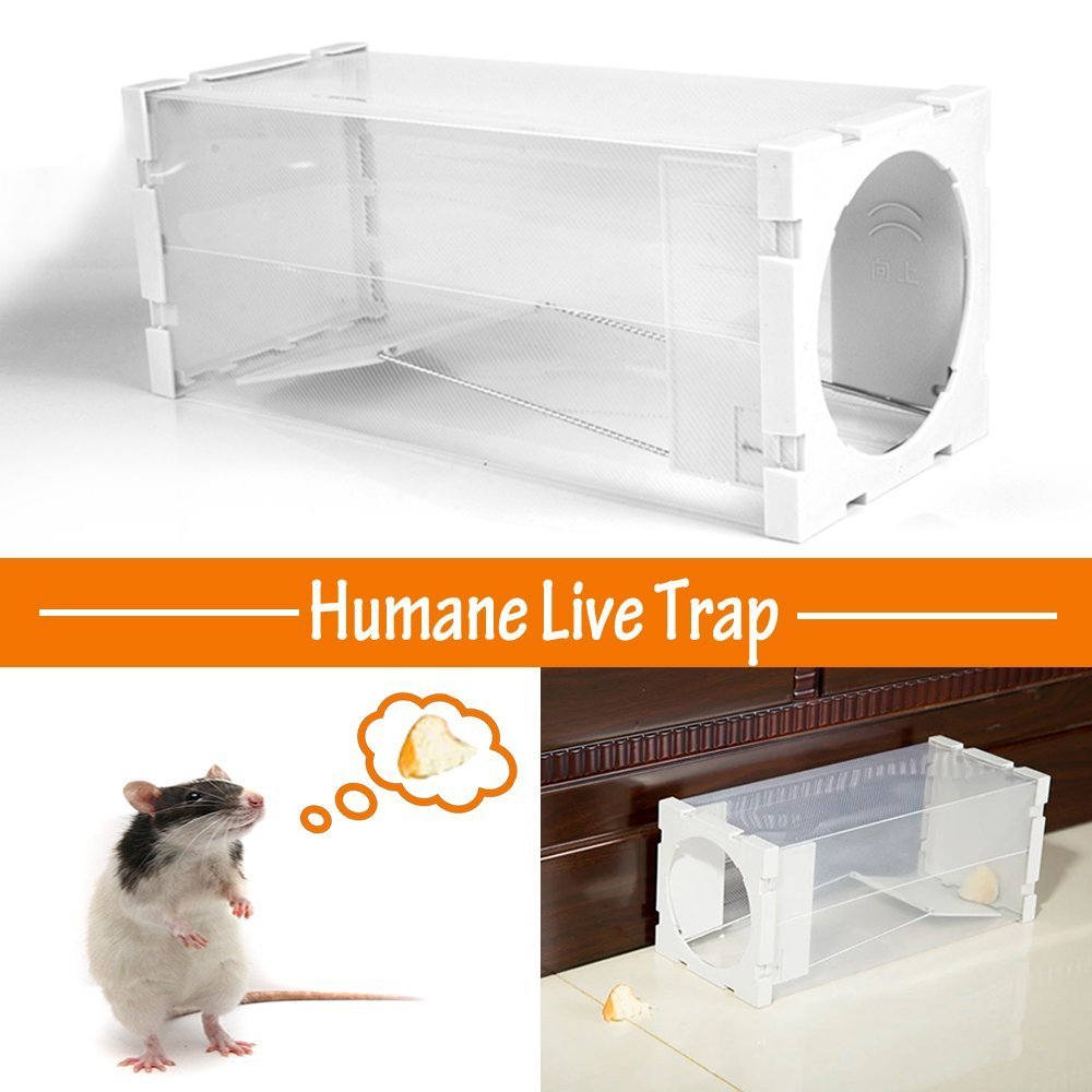 buy mouse trap 2win2buy humane live catch mouse cage trap rat