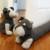 Schnauzer Stuffed Animal Door Stop Glass Shower Door Stop