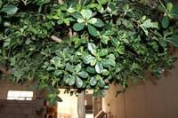 High quality artificial oak leaf for garden decoration fake green oak leaves
