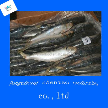 Tuna bait fishing nets prices for thailand buy tuna bait for Tuna fish price