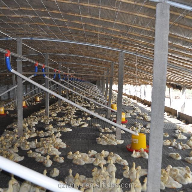 Automatic Duck Feeding System Yuanwenjun Com