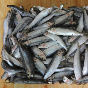 Chinese frozen whole fish frozen sardine HGT