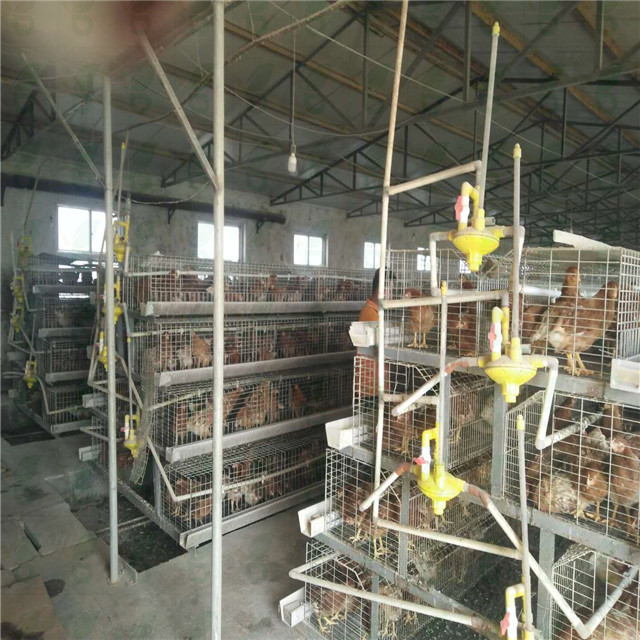 Chinese factory export standard layer chicken poultry battery cages