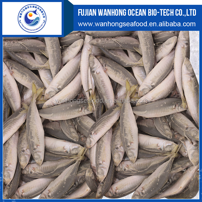Blue round scad fish frozen blue round scad in good quality
