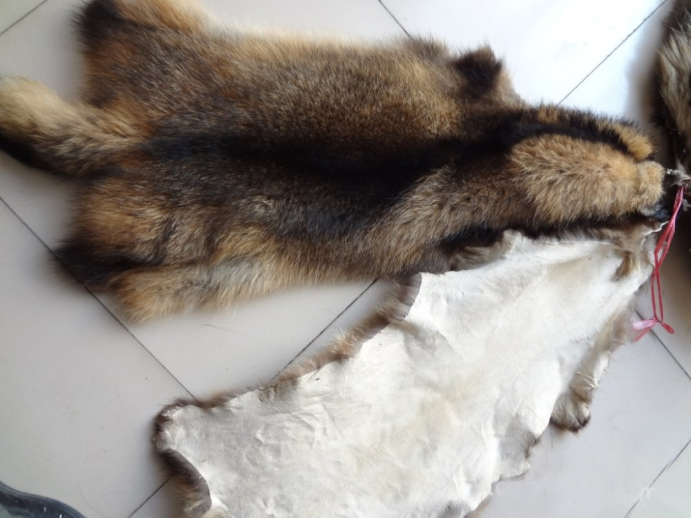 Animal skins real Raccoon dog fur hides high quality raccoon fur skins chinese genuine raccoon