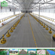 Export Kenya Galvanized Chicken Cage/Chicken Farm Hot Sale A Type Layer Poultry Battery Cages