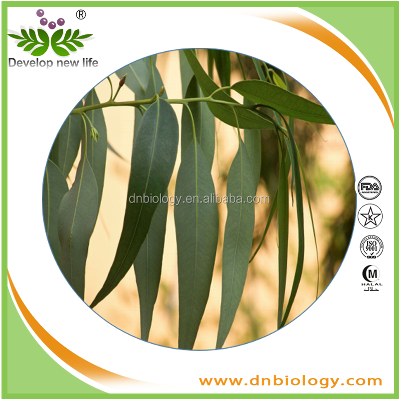 100% Natural Plant Extract Aromatherapy Lemon Eucalyptus essential oil OEM With Best Price