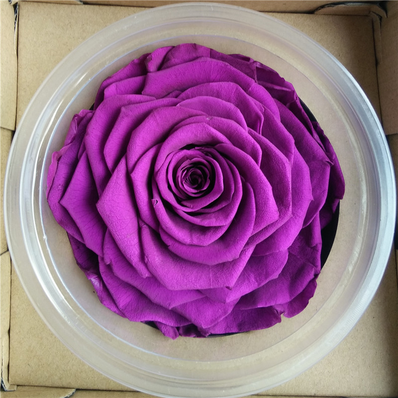 Wholesale Wholesale new product preserved flowers real touch fresh ...