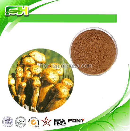 High Quality Armillaria Mellea Extract /Armillaria Mellea P.E. polysaccharide 10%-30%/Honey mushroom extract