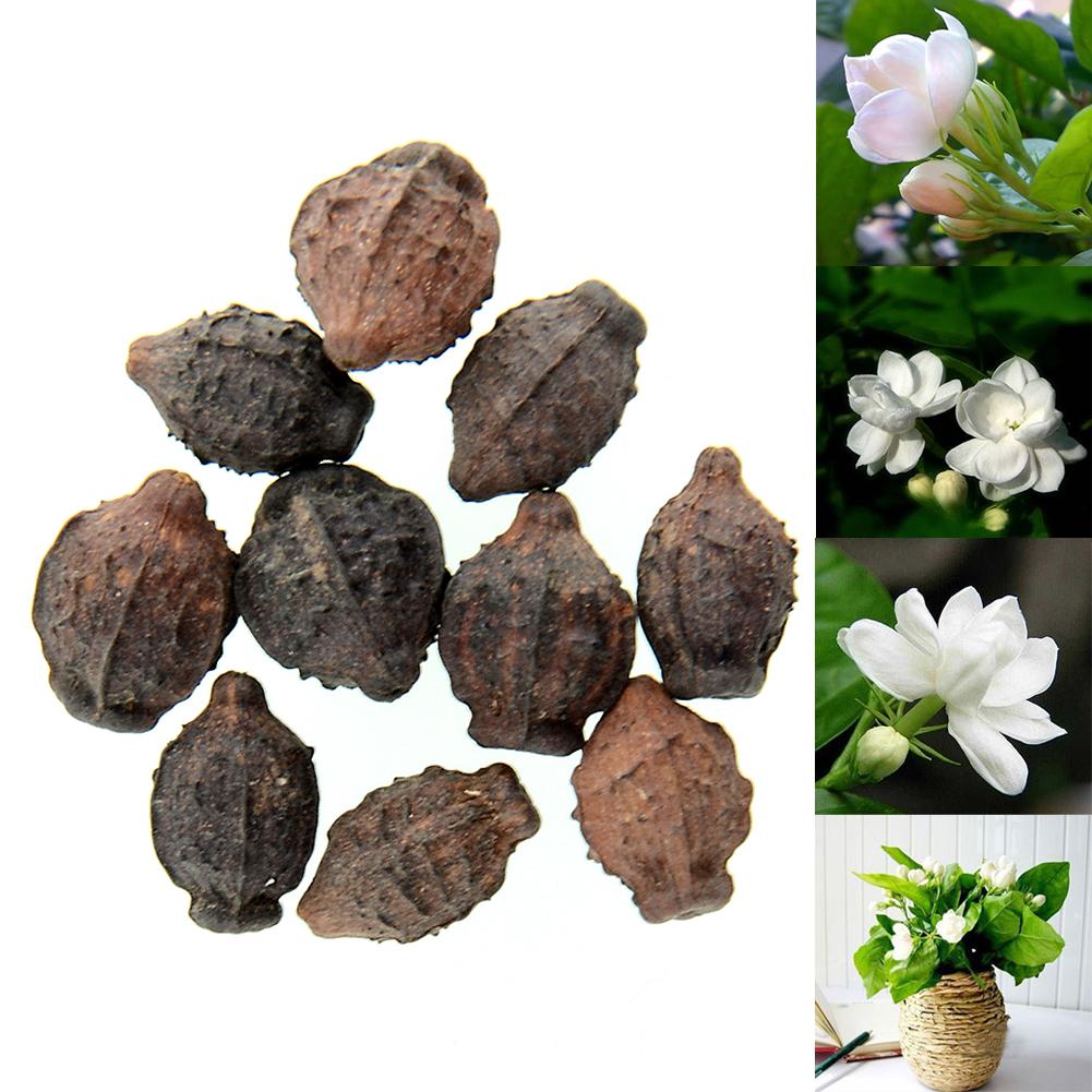 Buy 10pcs Gardenia Cape Jasmine Jasminiodes White Aromatic Flower